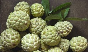 Atemoya / Custard Apple